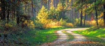Texas forest images Texas forest country jpg