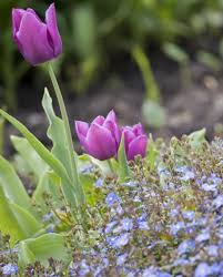 now s the time to plant these six flowering bulbs oregon