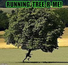 Run Forrest Run Meme - r me knee n trees imgflip