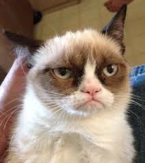 Cheezburger Meme Builder - grumpy cat reverse blank meme template memes pinterest meme