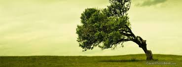 leaning tree landscape cover nature