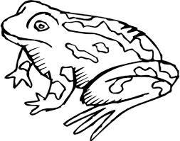 realistic frog clipart clipartxtras
