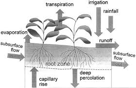 Define Water Table Chapter 1 Introduction To Evapotranspiration