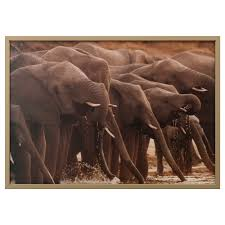 björksta picture with frame african elephants brass colour 140x100