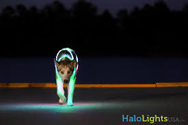dog collar lights waterproof halo lights led dog collars product review