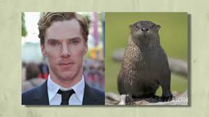 Cumberbatch Otter Meme - benedict cumberbatch is a sexy otter bbc america s the brit list