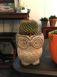 been finding these cute pots with drainage holes and everywhere