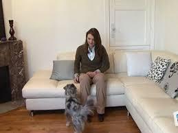 comment empecher chien de monter sur le canapé vie pratique dresser chien ne pas monter sur le canapé