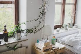 indoor vine plant indoor climbing plants