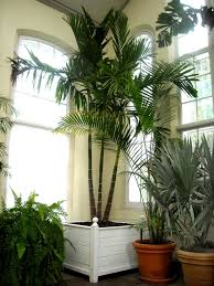 house plants pictures palms house interior