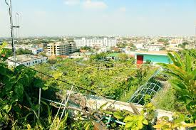 roof garden plants best rooftop garden over 400 different plants on one roof in