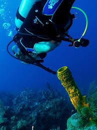 Strawberry Vase Sponge 5 Facts About Sponges U2014 Sanibel Sea
