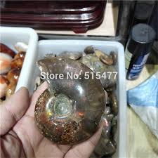 aliexpress buy 2 2lb rainbow iridescent ammonite shell