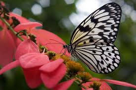 motivation the beautiful and meaning of a butterfly in our