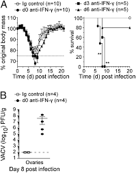 cd8 t cells use ifn γ to protect against the lethal effects of a