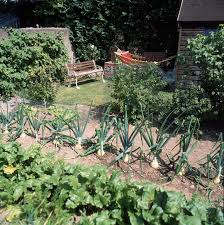 plant types kitchen garden