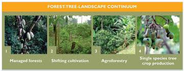 forests and food 3 the historical environmental and socio
