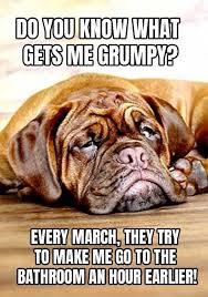 Grumpy Dog Meme - 17 unforgettable funny dog memes unleashed grumpy dog dog