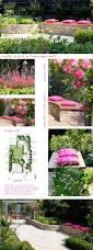 any gardener can grow cosmos gardening tips flower pot can hang a