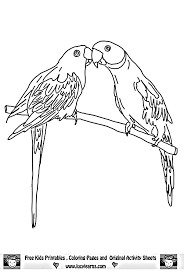 parrot coloring pictures kids coloring