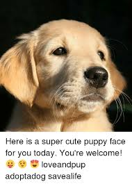 Cute Puppy Memes - here is a super cute puppy face for you today you re welcome