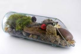 free upcycled bottle terrarium project guide art delphi glass