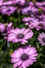 205 best garden flowers u0026 plants images on pinterest plants