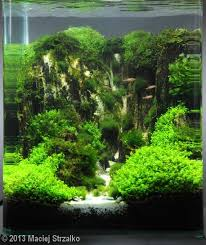 Amano Aquascaping 50 Best Amano Design Images On Pinterest Aquarium Ideas