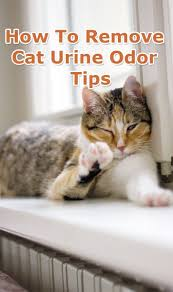 How To Comfort A Cat In Heat Best 25 Remove Dog Odor Ideas On Pinterest Pet Odor Remover