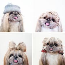 cute girls hairstyles dog fade haircut