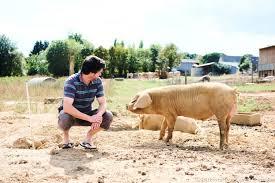 comment cuisiner un cochon comment cuisiner le porc régal