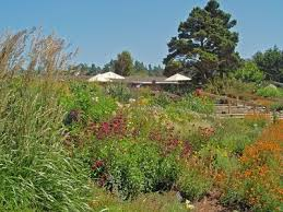 Fort Bragg Botanical Garden Stage And Cinema Regional Attraction Review Mendocino Coast