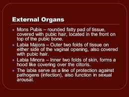 mons pubis hair male and female reproductive systems ppt video online download