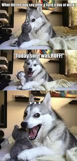 Pun Husky Meme - pun dog know your meme