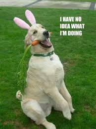 Silly Dog Meme - elizabeth maryon on twitter possibly my new favourite silly dog