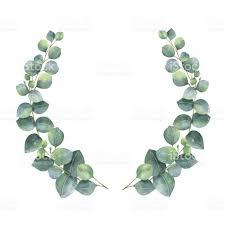 eucalyptus wreath watercolor wreath with silver dollar eucalyptus leaves and
