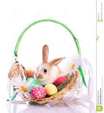 rabbit easter basket bunny in easter basket stock image image of fluffy 24091787