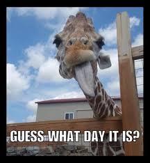 Meme Giraffe - april the giraffe internet reactions newsday