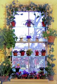 best 25 indoor window garden ideas on pinterest indoor herbs