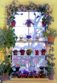 Window Ideas Best 25 Indoor Window Garden Ideas On Pinterest Indoor Herbs