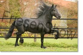 Womenizer³ - Bild \u0026amp; Foto von Tanja Six aus Pferde, Esel, Maultiere ... - 10539802