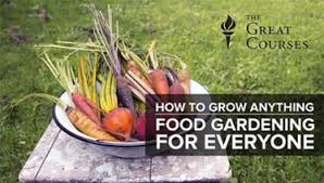 Container Gardening For Food - top container gardening tips u0026 techniques craftsy craftsy
