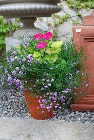 280 best garden container inspirations images on pinterest