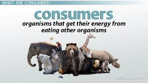 what are producers and consumers in biology definition