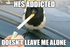 Crow Meme - piebald crow smoking a cigarette memes imgflip