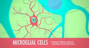 the nervous system crash course 1