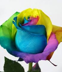 roses colors roses and smiles us rosesnsmiles