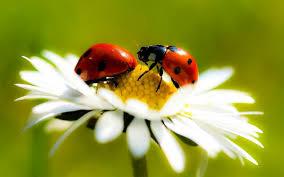 the friendship factory hello spring hello ladybugs make