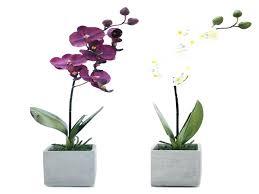 best plant for desk best desk plant beautiful office design office pot plants good