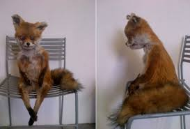 Taxidermy Fox Meme - meet stoned fox the badly stuffed creature reborn as a russian